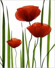 img_Les-coquelicots_Lieven-COPPIETERS_ref~KE301_mode~zoom.jpg